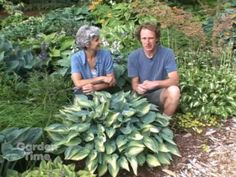 Sun and Shade Hostas - a very good video about growing hostas, and how being planted in sun or shade will make them look very different.