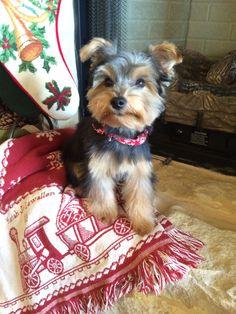 Lola first hair cut before Christmas ❤️