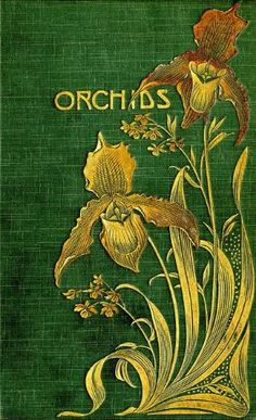 Book cover illustration Orchids by Andrea A. Elisabeth