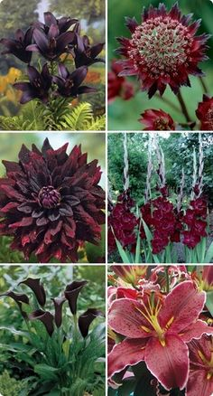 As Dark as They Get Collection: Asiatic Lily Landini, Decorative Dahlia Rip City, Gladiolus Belle De Nuit, Black Forest Calla Lily, Oriental Lily Sixth Sense