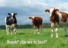 Te laat? Booooohhhh, we're too late for your birthday! Change text and send as card from Kaartje2go - creagaat dieren