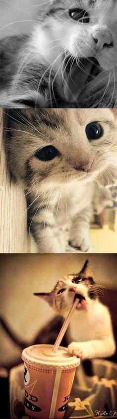 cutest cats #cute #cats #kittens