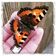 #butterfly #spring