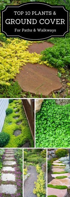 Ground cover plants for walkways and paths.