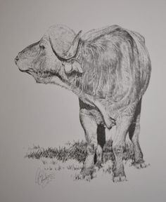 Monochromatic animal portraiture research