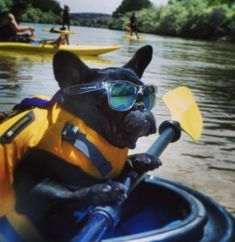I can take my future frenchie kayak camping! Funny Animal Videos, Funny Animal Pictures, Funny Animals, Cute Animals, Fierce Animals, Pet Shop, Kayaking With Dogs, Rat Terrier, Oui Oui
