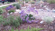 Rock Garden -Drought Tolerant