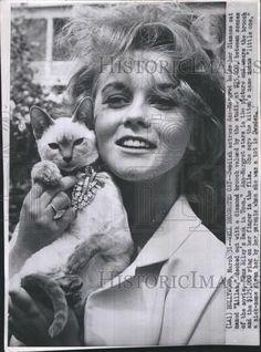 "1965 Press Photo Swedish Actress Ann Margaret with her Siamese Cat ""Lilliian"""