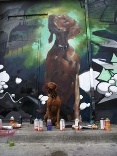 Aldan Gray's Vizsla, beautiful
