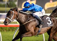 Australian wonder mare Winx (Aus) (Street Cry {Ire}), who has won 13 consecutive races and signed off her spring campaign with a second victory in Mooney Valley's G1 Cox Plate Oct., is nearing a return …