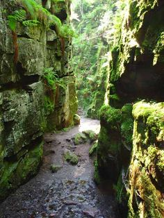 Lud& Church, a rocky defile in Staffordshire, England around which many legends cluster. It is said to have been used as a secret meeting place by Lollards in the century, and to Forest Path, Forest Garden, Green Knight, Canon, Walking Routes, Magical Forest, Peak District, British Isles, Derbyshire