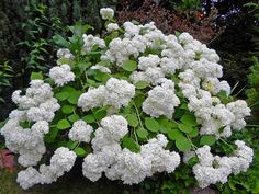 przycinanie hortensji krzewiastej Love Garden, Holidays And Events, Gardening Tips, Planting Flowers, Beautiful Flowers, Flora, Diy And Crafts, Pergola, Instagram Posts