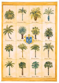 Palms Amp Cycads Of The American Southeast Poster Florida
