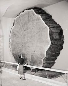1901, Andrew Ellicott Douglass founds the field of dendrochronology by inventing a system whereby known sequences of events (floating chronologies) can be fixed to specific years (absolute chronologies) via the scientific analysis of tree rings.
