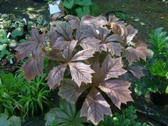 Alternative Eden Exotic Garden: A Sunny Day at Hardy Exotics