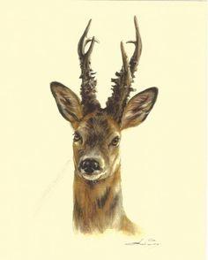 Cliquez sur l'image pour fermer ce zoom Chien Springer, Wildlife Tattoo, Roe Deer, Moose Art, The Originals, Anatomy, Nature, Diy, Inspiration