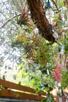 Quick-Invisible-Airplant-Frame-ryanbenoitphoto-thehorticult-RMB_6845
