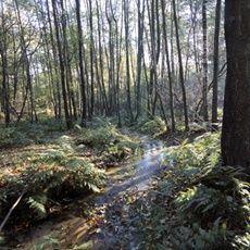 Het springendal luidt de naam van dit stukje Twente bij Ootmarsum. Schilderachtige kwelvijvers, watervalletjes en smalle beekjes midden in het bos zorgen voor een romantische aanblik. Heuvels, weilanden, meertjes, hooilanden, heide en historische boerderijen maken het plaatje compleet.