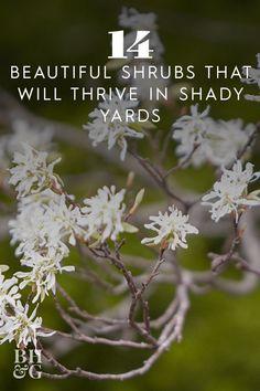 Garden Shrubs, Garden Pool, Garden Trees, Shade Garden, Garden Plants, Shade Shrubs, Shade Plants, Trees And Shrubs, Garden Of Earthly Delights