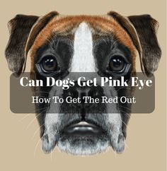 can-dogs-get-pink-eye-and-how-to-get-the-red-out