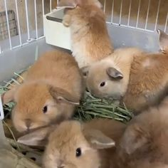Rabbit Cage Calculator (Rabbit Care Guide) Video Credit: Cute Bunnies In a Cage on IG Cute Baby Bunnies, Baby Animals Super Cute, Cute Little Animals, Cute Funny Animals, Small Animals, Pet Bunny Rabbits, Pet Rabbit, Hamster Pics, Bunny Cages