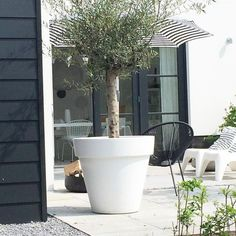 Large backyard landscaping ideas are quite many. However, for you to achieve the best landscaping for a large backyard you need to have a good design. Outdoor Plants, Outdoor Spaces, Outdoor Gardens, Outdoor Living, Olivier En Pot, Dream Garden, Home And Garden, Pot Jardin, Back Gardens