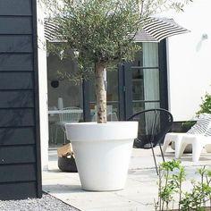 292 vind-ik-leuks, 25 reacties - wobke van der wardt (@studio.ww) op Instagram: 'Wat een heerlijke dag! Niet verkeerd zo thuiskomen. Fijn weekend! #weekend #garden #tuin…'