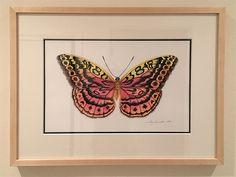 Resplendent Forester Butterfly framed