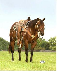 Quarter horses are my favorite