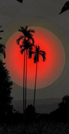 Hawaiian Lights
