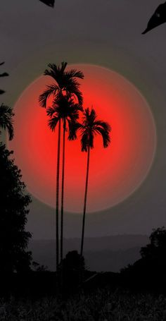 Silhouette of Palm trees & Red moon art Beautiful Moon, Beautiful World, Beautiful Places, Simply Beautiful, Amazing Places, Images Cools, Stars Night, Cool Pictures, Beautiful Pictures