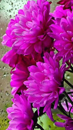 Discover & share this Animated GIF with everyone you know. GIPHY is how you search, share, discover, and create GIFs. Flowers Gif, All Flowers, Pretty Flowers, Purple Flowers, Summer Flowers, Colorful Flowers, Beautiful Gif, Beautiful Gardens, Chrysanthemum Flower
