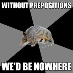English major armadillo strikes again