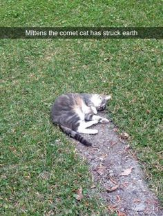 Comet Kitty http://ibeebz.com