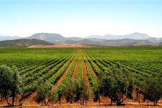 Wine Culture | Sonoma