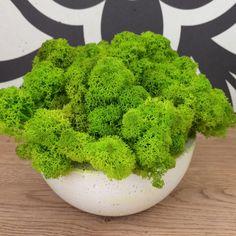 Misa betonowa z chrobotkiem Malaga, Broccoli, Herbs, Vegetables, Food, Meal, Eten, Herb, Vegetable Recipes