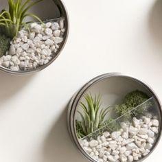super cool and easy to craft this miniature terrarium.