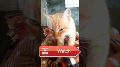 😸 Funny cat massager 😼 My cat loves me so much that she massages me every morning hahahahaha 😽 on Pet Lovers 😻