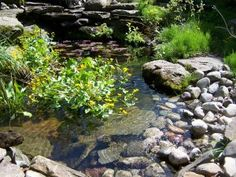 Native Return always includes a beach for easy access and exit Indoor Water Garden, Backyard Water Feature, Ponds Backyard, Water Gardens, Garden Ponds, Natural Swimming Ponds, Natural Pond, Pond Landscaping, Landscaping With Rocks
