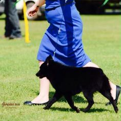 My boy in the show ring