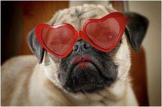 Pug kisses!