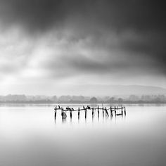 Oyster Bar with Birds par George Digalakis