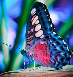 Harika ve renkli bir kelebek