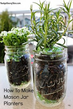 Grow herbs in your kitchen with mason jar planters