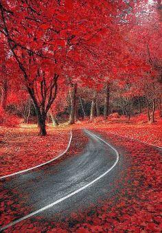 Spanish Autumn - Spain