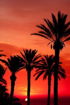 #Tunisie #Djerba .  Le soleil se couche derrière les palmiers de l'île, végétation caractéristique dans cette zone chaude et aride de l'Afrique du Nord. http://vp.etr.im/f79a