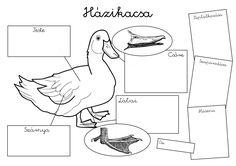 Kids Learning, Montessori, Education, Teacher, Printables, School, Professor, Teaching