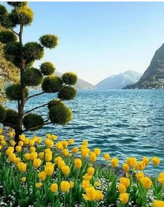 (notitle) – Eliane borgmann – Join in the world of pin Life Is Beautiful, Beautiful Places, Spring Landscape, Belleza Natural, Good Morning Images, Science And Nature, Beautiful Landscapes, Landscape Photography, Scenery