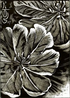 flower scratchboard