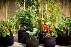 Bac géotextile Potted Plants, Garden Plants, Sensory Garden, City Farm, Permaculture Design, Forest Garden, Small Space Gardening, Urban Gardening, Little Flowers